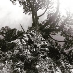 beacontree